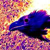 Alternative Universe Eagle