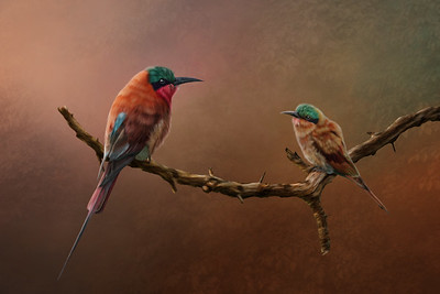 Bee Eaters v5