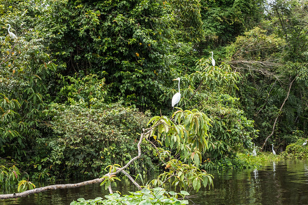 Large white stork perched on the branch along the riverbed
