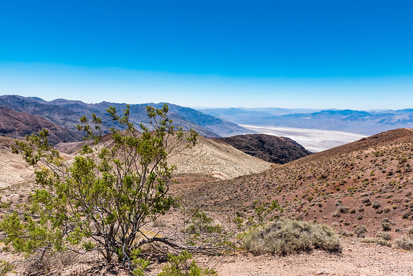 Desert shrub with landscape and badwater basin in background