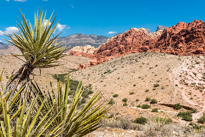 Left corner with desert cacti and red and tan sandstone mountains in background