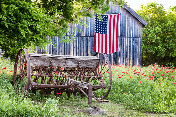 Field of red poppies with farm equipment and barn