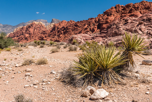 Desert cacti in right foreground with red sandstone