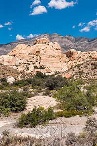 Desert brush in front of yellow limestone rock formation