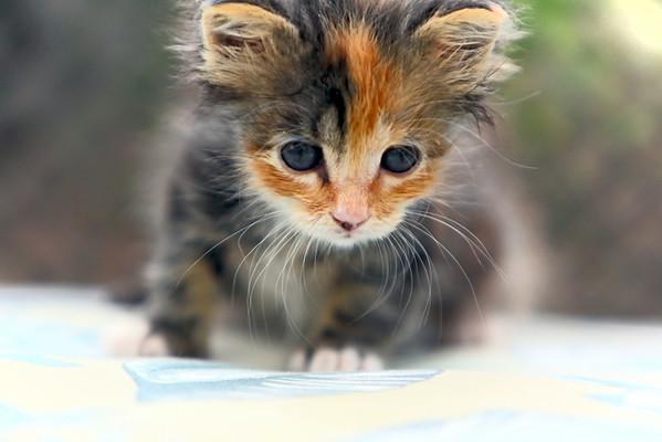 2014 Kitten Rescue