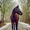 2017-01-21 | horse shooting klocksin