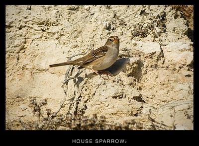 Back Bay Birds - Misc.