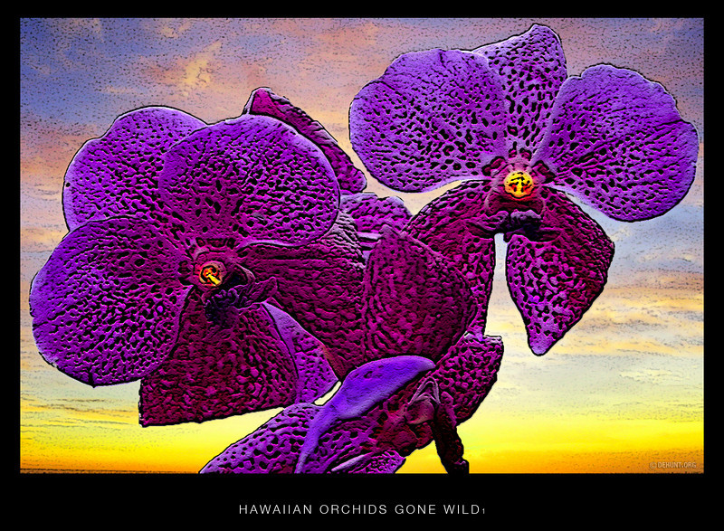 Hawaiian Orchids gone wild 1.