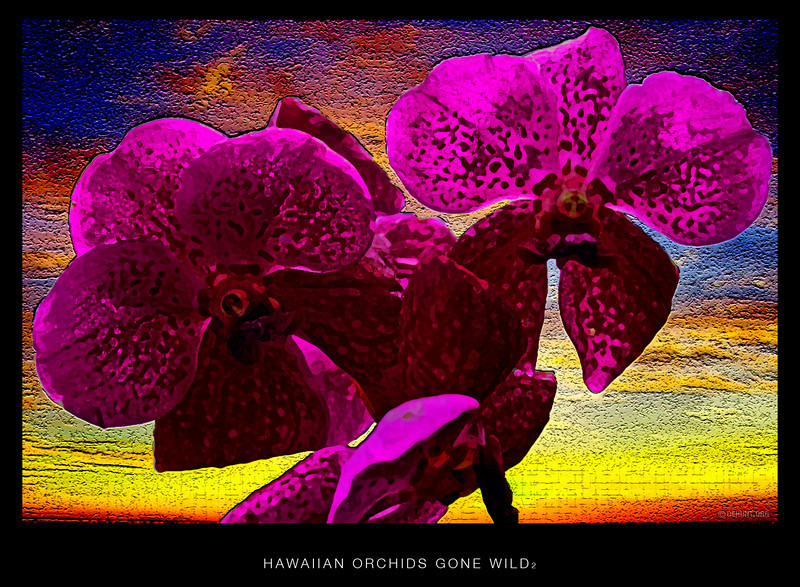 Hawaiian Orchids gone wild 2.