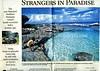 Mariana Islands  Star Ledger  Newark, NJ, USA  Aug 10, 2003