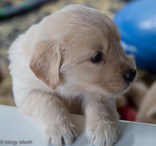 Mayzie Puppies MAY 30