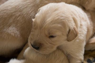 Mayzie Puppies May 13