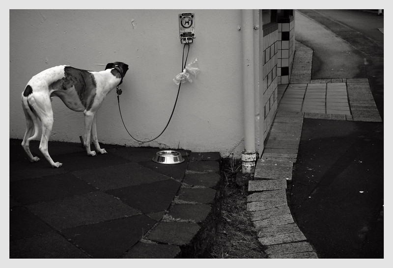 Dog on a Lead Wellington 2009
