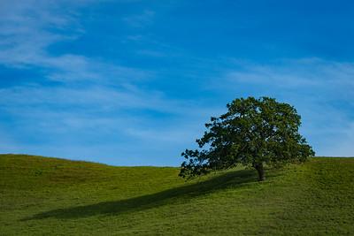 Lone Tree, Black Diamond Preserve