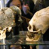Elongated human skulls. My theory on that: The local people tried to imitate the  narrow faces of a social superior group in contrast to the locals very round heads. In the 16th century those were the Spaniards and before that the phenotype which is depicted in the Easter Island Moai statues. There are some reports, that the Inca had some European phenotype characteristics. Paracas History Museum.
