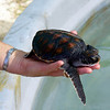 Turtle at the Marine Research Centre.