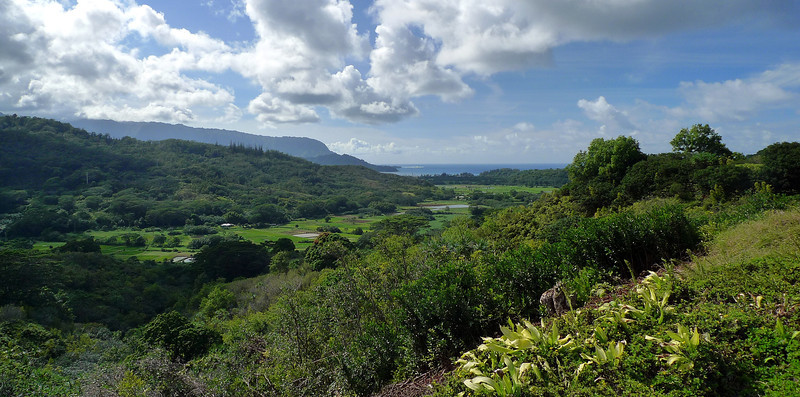 View of the Hanalei Valley.