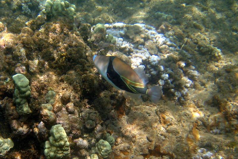 Snorkeling at Kapalua Bay.