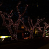 Trees lit up at night in Waikiki. They generate power by burning diesel so its an efficient use of resources!