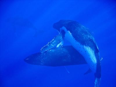 Niue- whales