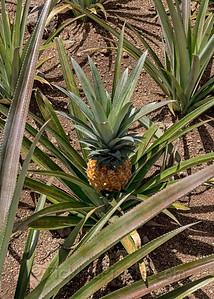 One Sweet Pineapple