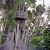 The tree house at Falealupo. You can spend the night up here but the mosquito's would be fairly vicious!