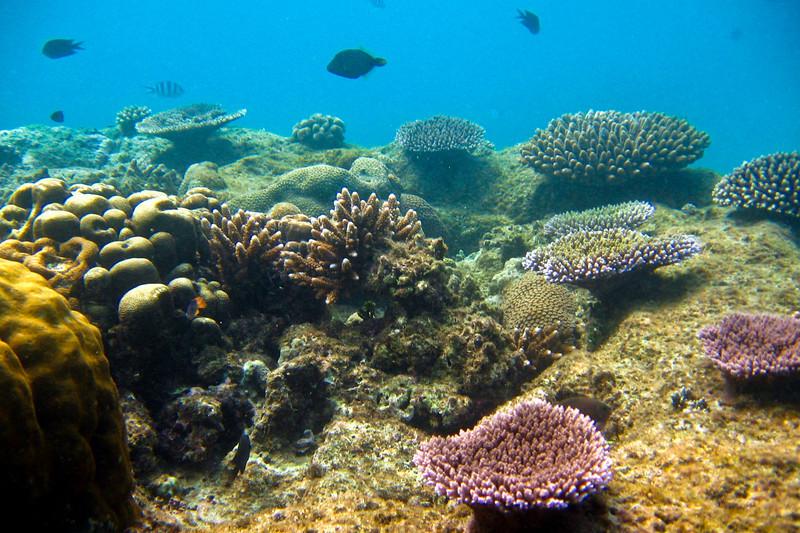 Snorkeling Hideaway Island Marine Reserve.