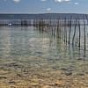 Fishing net near Pango Village in Port Vila