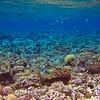 Snorkelling on the reef on the Coogoola trip.