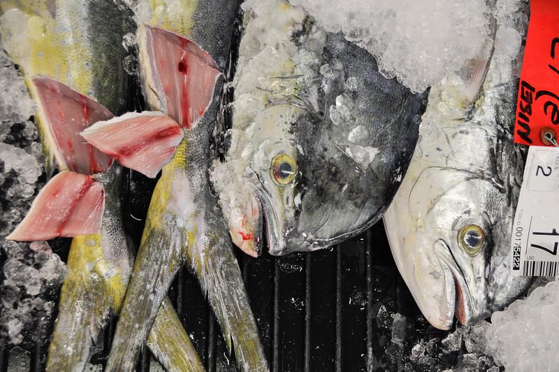 Fresh mahi-mahi on display at the fish auction