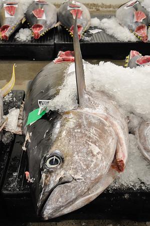 Yellowfin tuna at the fish auction