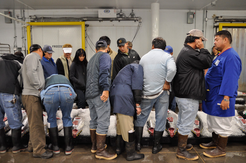 Fish buyers at Oahu's longline auction