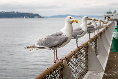 Seagulls - hoping Ivar's customers will share