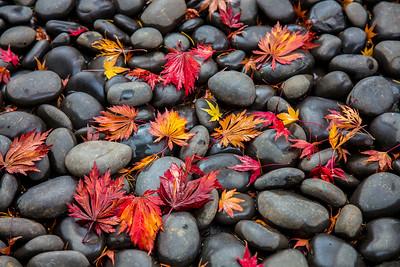 Fall's Fallen Color - L