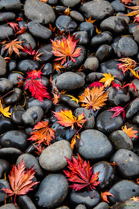 Fall's Fallen Color - P