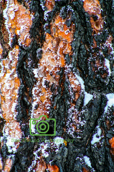 Snow Dusted Tree Bark