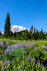 Mt Rainier Alpine Meadow