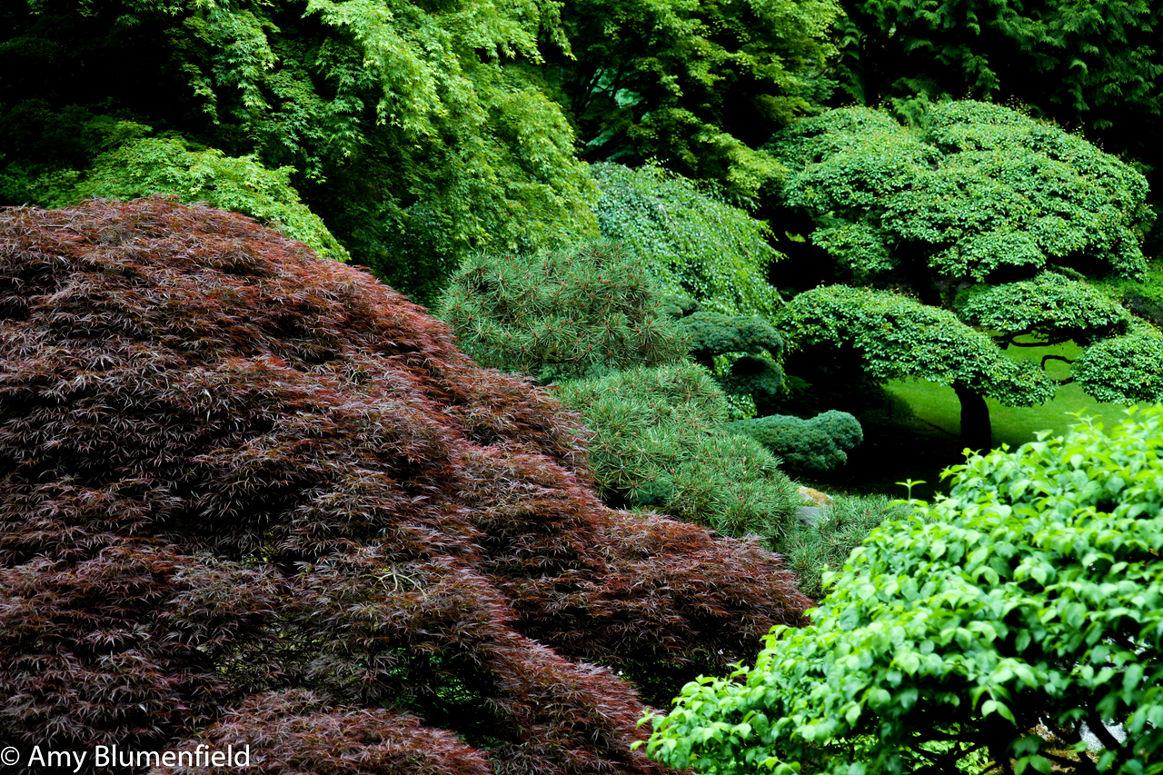 So many greens. And a bit of red.