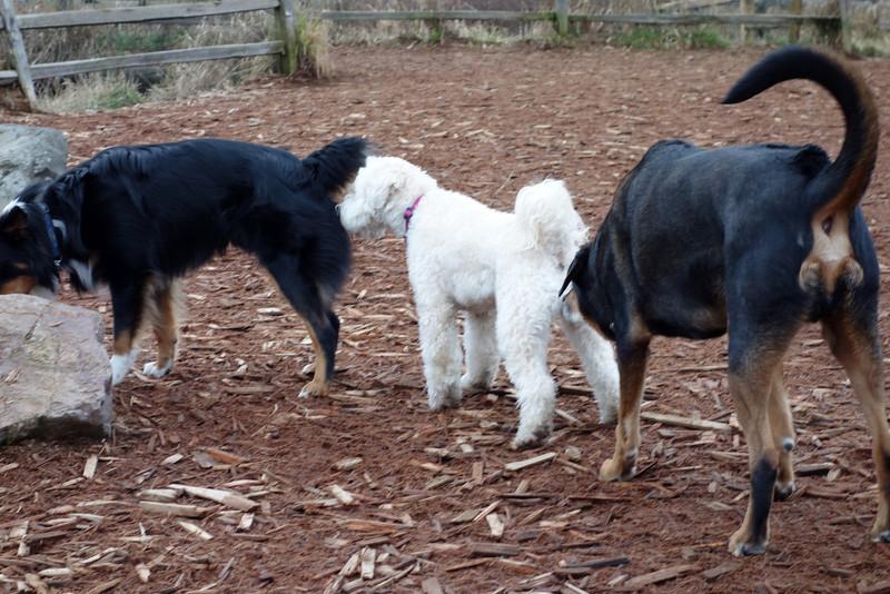 Doggy conga line.
