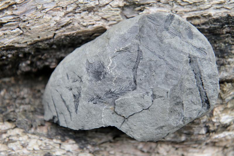 Little fossils.