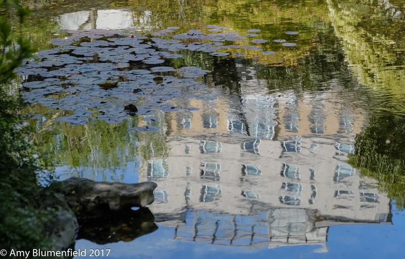 Water lilies a la Amy