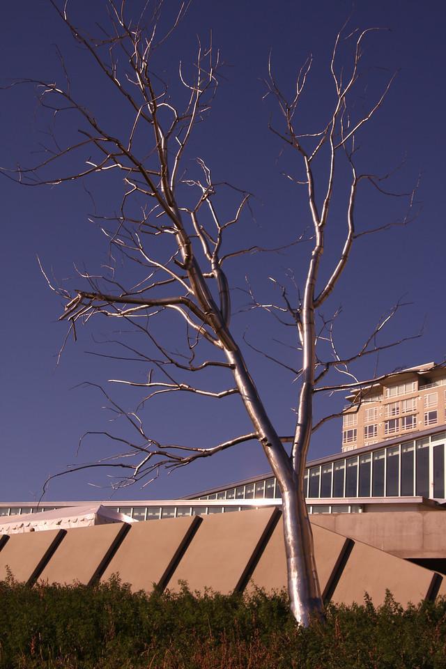 Silver tree.
