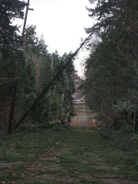 Near my house after big Dec. '06 windstorm.