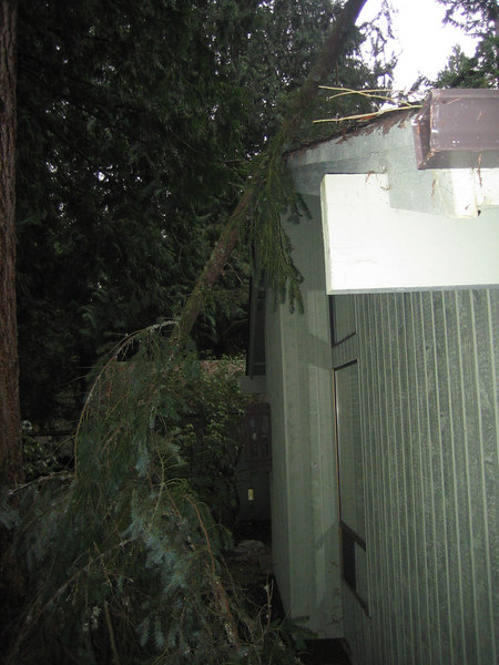 Branch that fell on my house