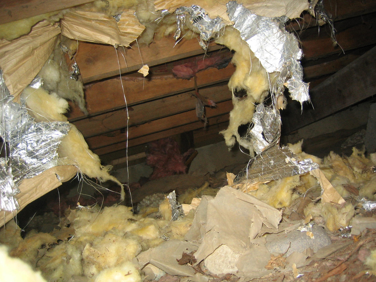 This is what Gus did to the insulation under my dining room. Bad bad dog...