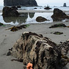 Starfish and sea stacks