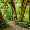 Hoh Rainforest trail