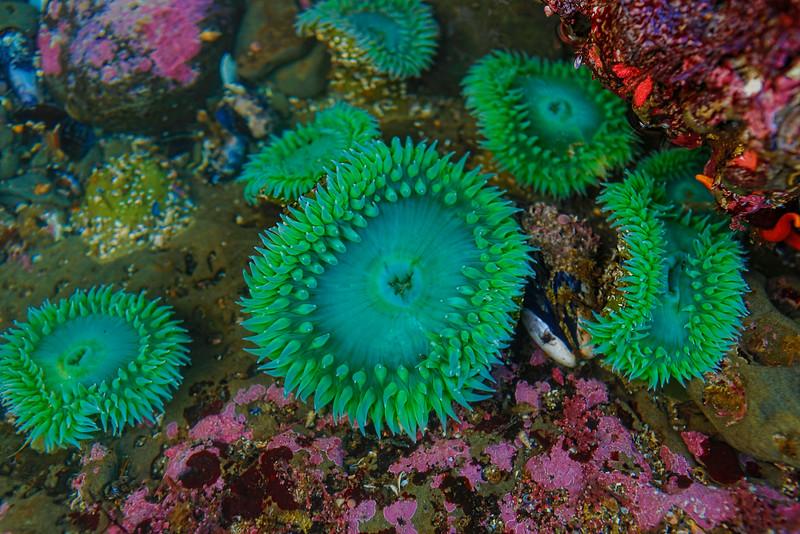 ~ Undersea Garden ~