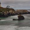 ~ Starfish Cove ~