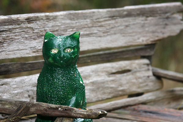 Green Cat Bed and Breakfast